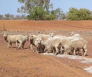 Farmers in remote Australia