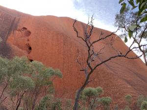 Woma Pythons Tjukurpa displayed on Uluru